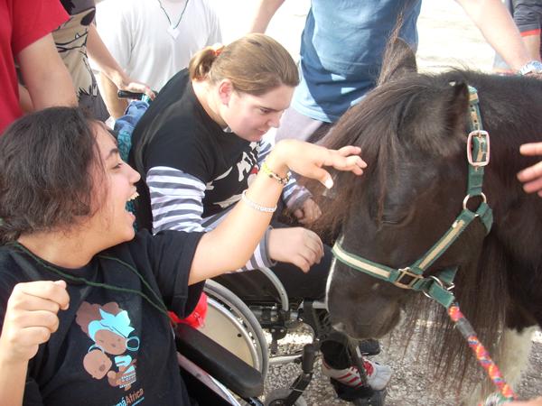 terapias con caballos