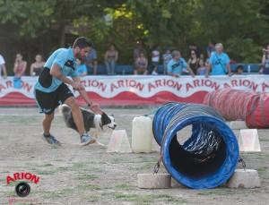 entrenamiento perros
